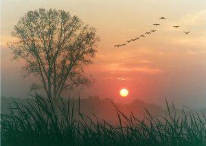 L'Amour ne Meurt Jamais de Mort Naturelle