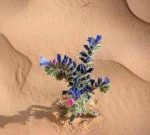 Le Plus Beau Cadeau de La Nature