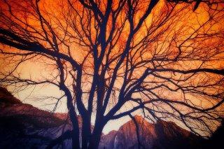 Le bonheur d'un arbre