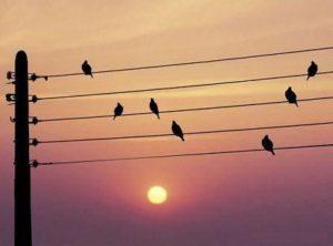 Le Bonheur Est Une Note