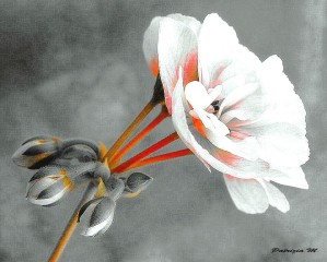 Fleur-Patt.jpg