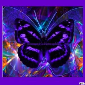 Message-du-Papillon.jpg