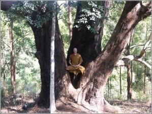L-arbre-et-Lao-Tseu.jpg