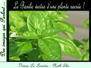 Le Basilic..