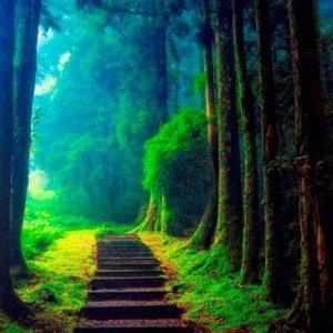 Choisir Sa Route