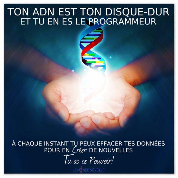Ton ADN, Ton Disque Dur