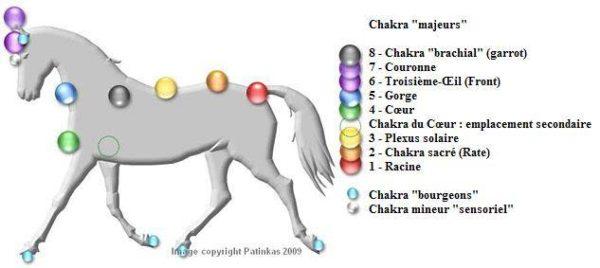 Chakras Cheval