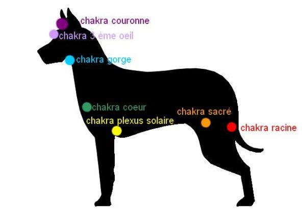 Chakras Chien