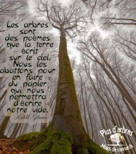 Les Arbres Sont Des Poèmes...