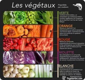 Les Végétaux