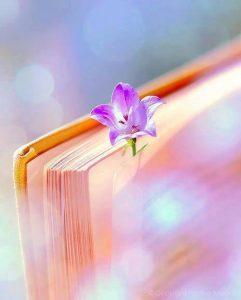 Un livre Est Toute Une Aventure