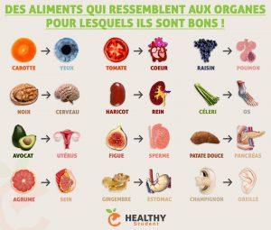 Ces Aliments Qui Ressemblent Aux Organes...