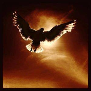L'Amour Est Comme un Oiseau, Libre
