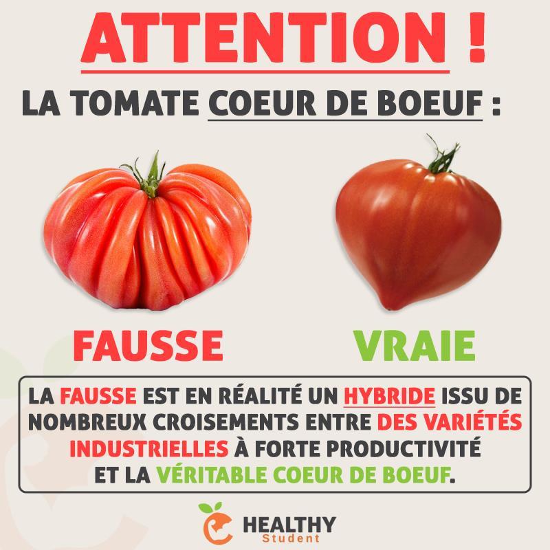 La tomate coeur de boeuf soriah amahom com - Planter des tomates coeur de boeuf ...