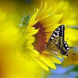 Les Papillons Nous Rappellent