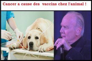 Les Vaccins Pour les Chiens Sont Sans Aluminium