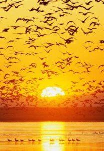L'Amour Est Comme un Oiseau Libre d'Aller Partout
