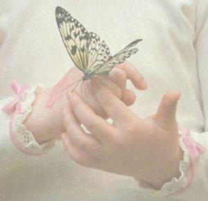 Les Papillons Nous Enseignent