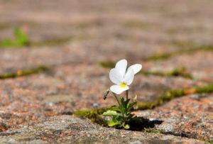 Le Crédo de l'Optimiste