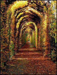 Le Chemin Continue
