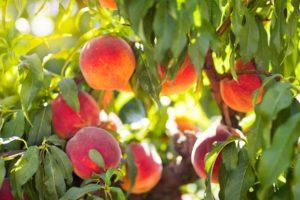 Les Trois Vertus Fondamentales Des Fruits